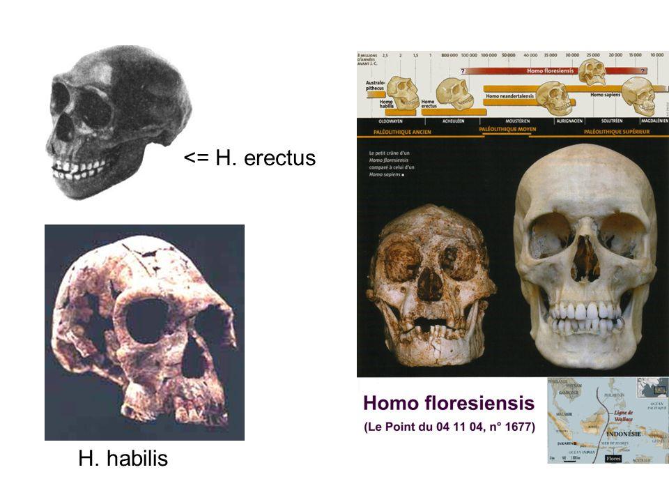 <= H. erectus H. habilis