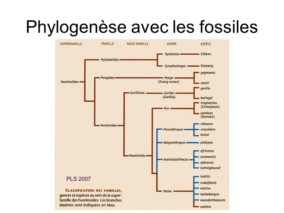 Phylogenèse avec les fossiles