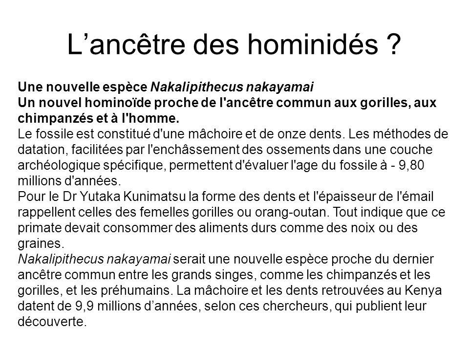 Lancêtre des hominidés .