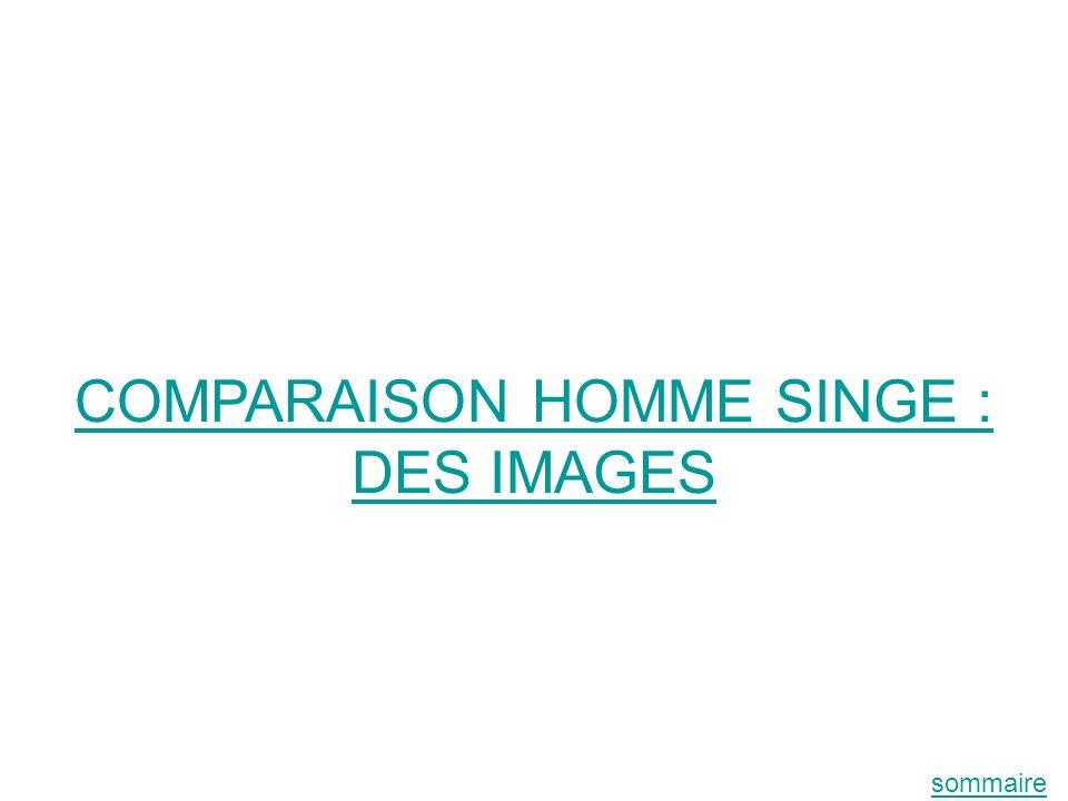 COMPARAISON HOMME SINGE : DES IMAGES sommaire
