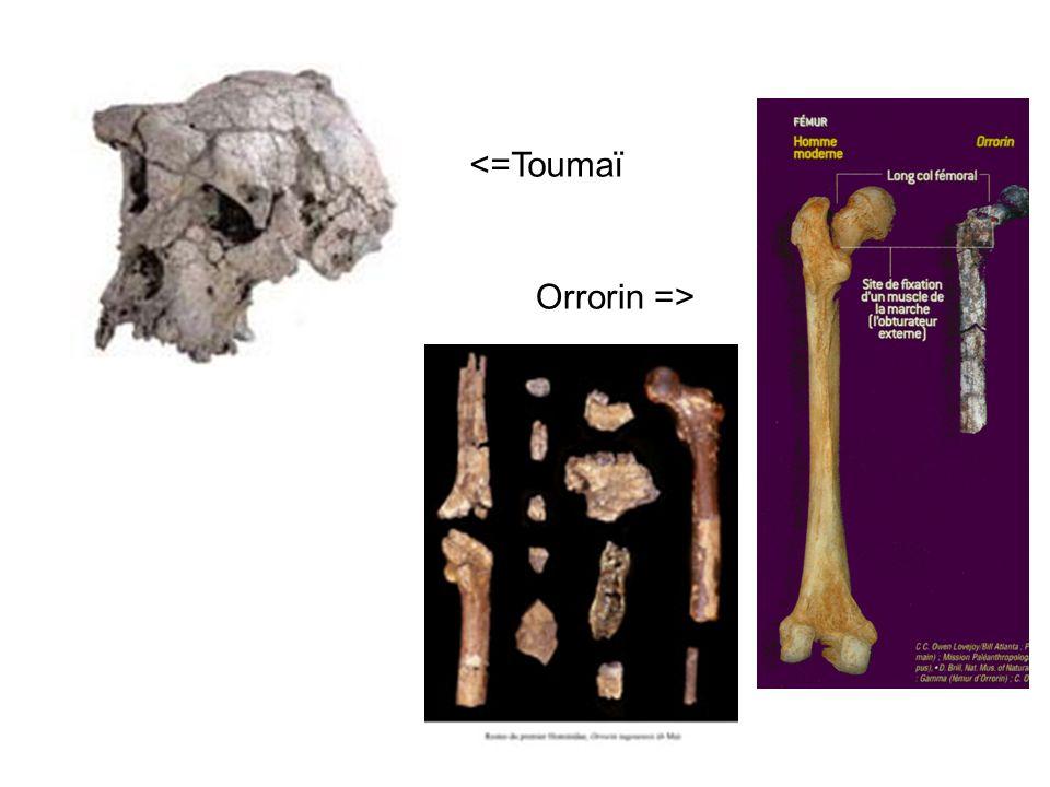 <=Toumaï Orrorin =>