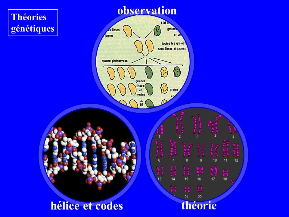 théorie Théories génétiques hélice et codes observation