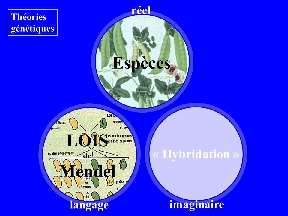 Espèces Théories génétiques langage réel « Hybridation » imaginaire LOIS de Mendel