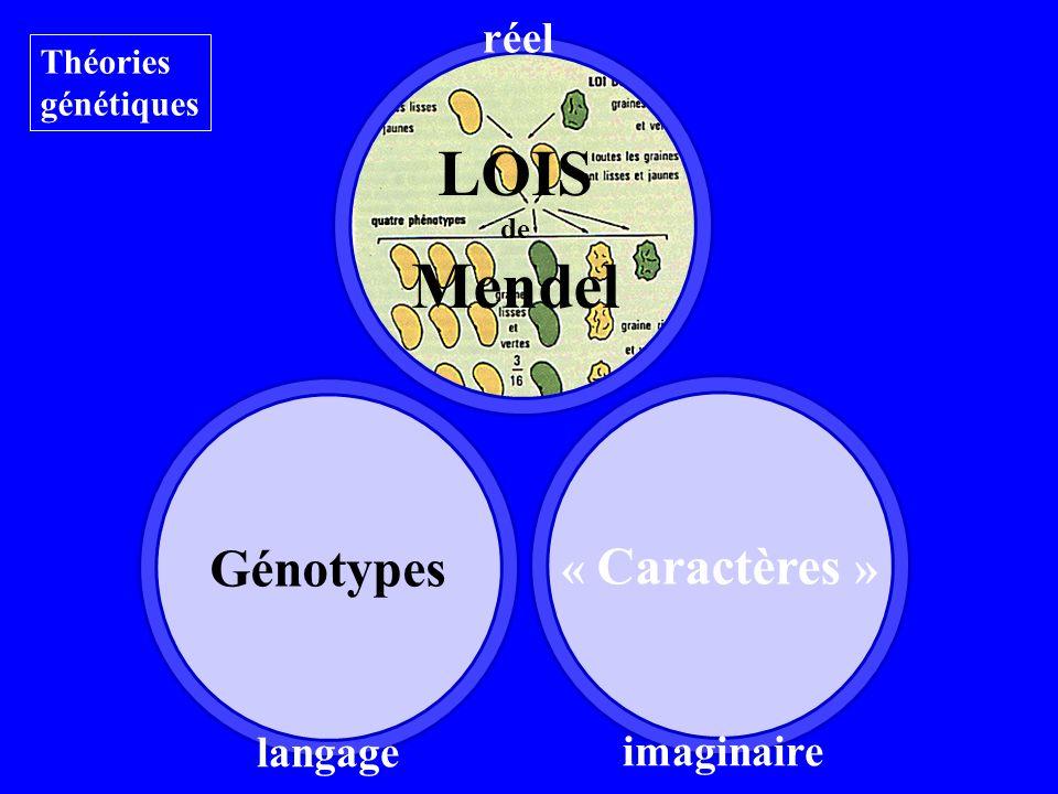 LOIS de Mendel Génotypes Théories génétiques langage réel « Caractères » imaginaire