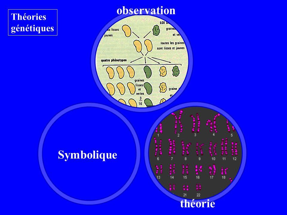 observation théorie Théories génétiques Symbolique