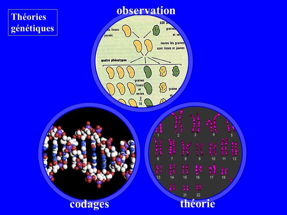 théorie Théories génétiques codages observation