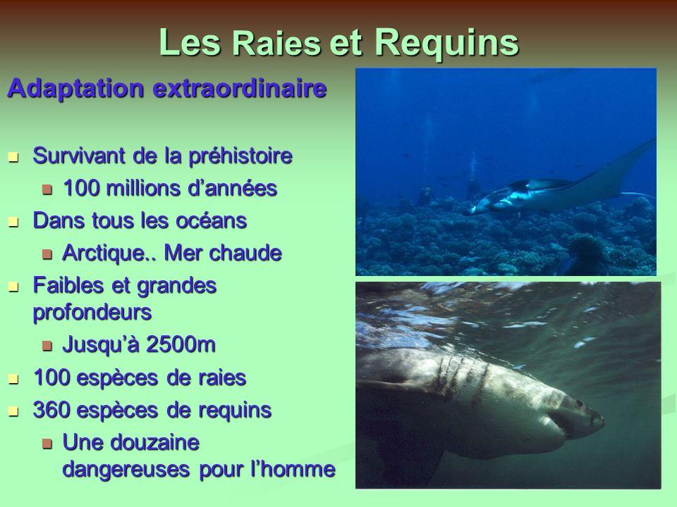 Présentation des Raies et Requins au Club subaqua du CERN Diaporama et discussions (45 mn) Diaporama et discussions (45 mn) Film de Daniel Javerzat (13 mn) Film de Daniel Javerzat (13 mn) Repas Canadien Repas Canadien Le 25 Mars 2004 de Jean Claude Wollès