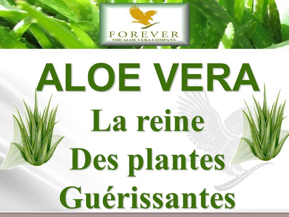 www.themegallery.com 4 Aloe Vera Nous sommes le premier producteur de Gel dAloès au monde www.foreverliving.com Les produits de la ruche Nous sommes également lapiculteur, mondialement le plus important