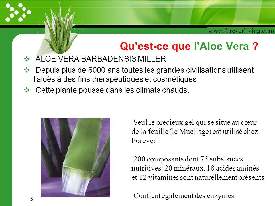 www.themegallery.com 5 Quest-ce que lAloe Vera ? ALOE VERA BARBADENSIS MILLER Depuis plus de 6000 ans toutes les grandes civilisations utilisent l'alo
