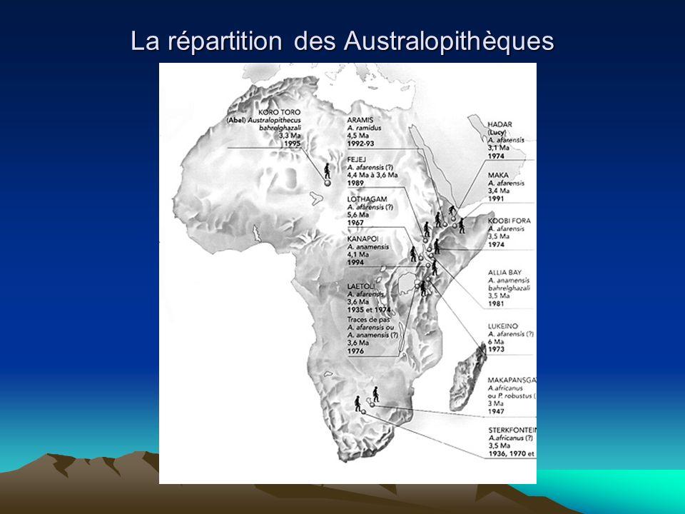 La répartition des Australopithèques