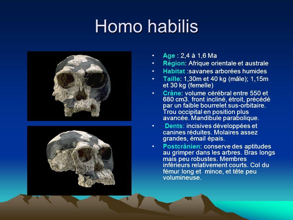 Homo habilis Age : 2,4 à 1,6 Ma Région: Afrique orientale et australe Habitat :savanes arborées humides Taille: 1,30m et 40 kg (mâle); 1,15m et 30 kg