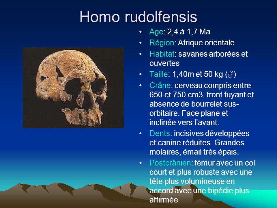 Homo rudolfensis Age: 2,4 à 1,7 Ma Région: Afrique orientale Habitat: savanes arborées et ouvertes Taille: 1,40m et 50 kg () Crâne: cerveau compris en