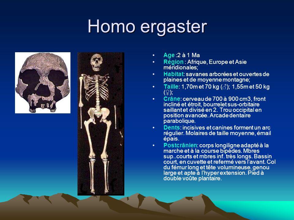 Homo ergaster Age :2 à 1 Ma Région : Afrique, Europe et Asie méridionales; Habitat: savanes arborées et ouvertes de plaines et de moyenne montagne; Ta