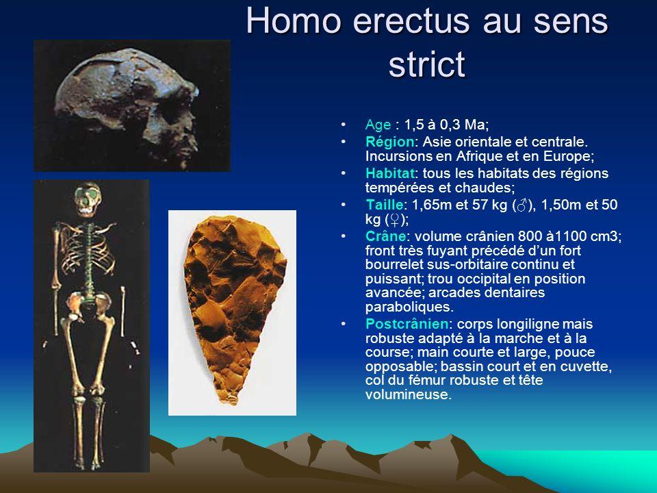 Homo erectus au sens strict Age : 1,5 à 0,3 Ma; Région: Asie orientale et centrale. Incursions en Afrique et en Europe; Habitat: tous les habitats des
