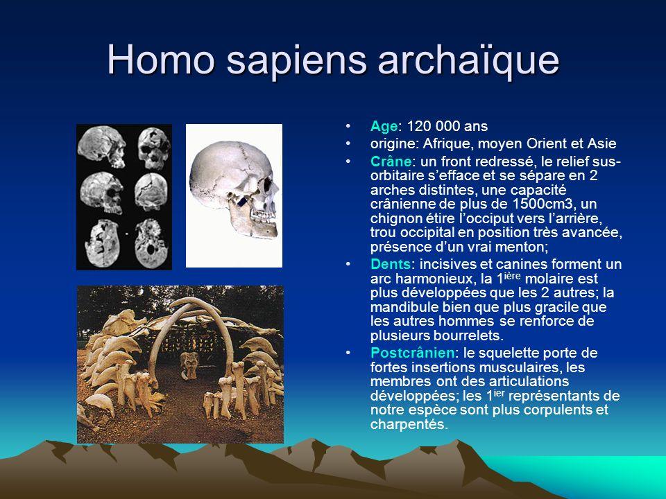 Homo sapiens archaïque Age: 120 000 ans origine: Afrique, moyen Orient et Asie Crâne: un front redressé, le relief sus- orbitaire sefface et se sépare
