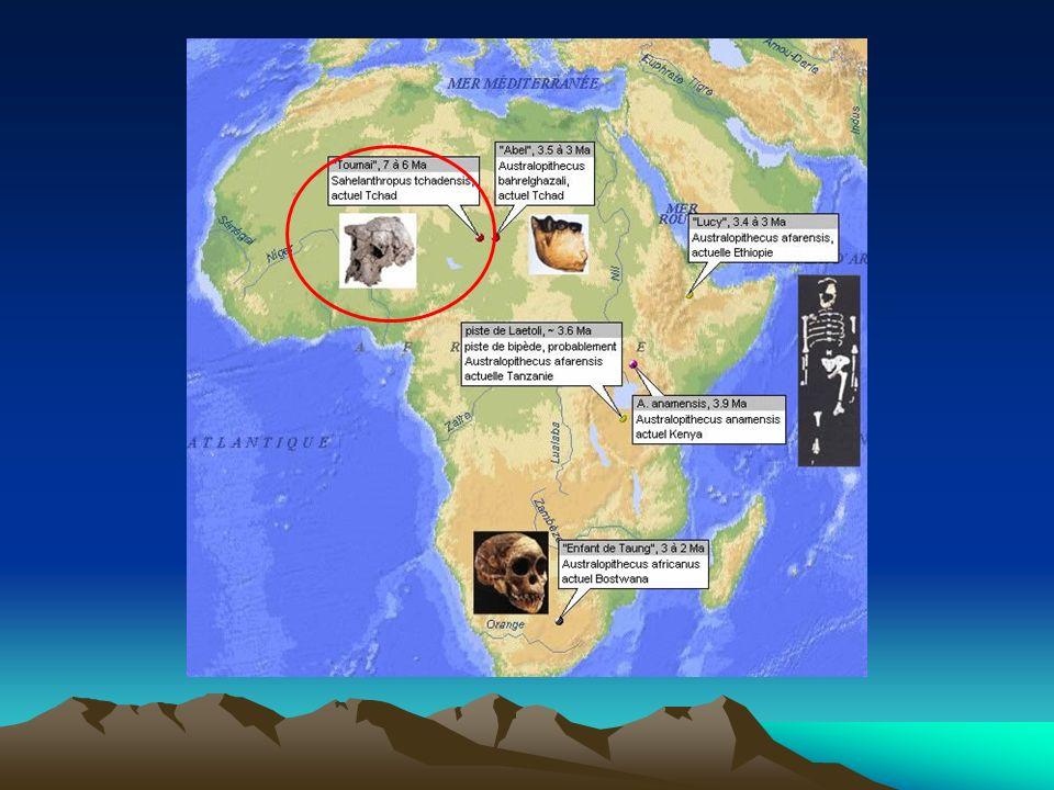 Un monde dAustralopithèques Les australopithèques sont des hominidés capables de marcher debout et qui possèdent des mâchoires puissantes munies de dents robustes.