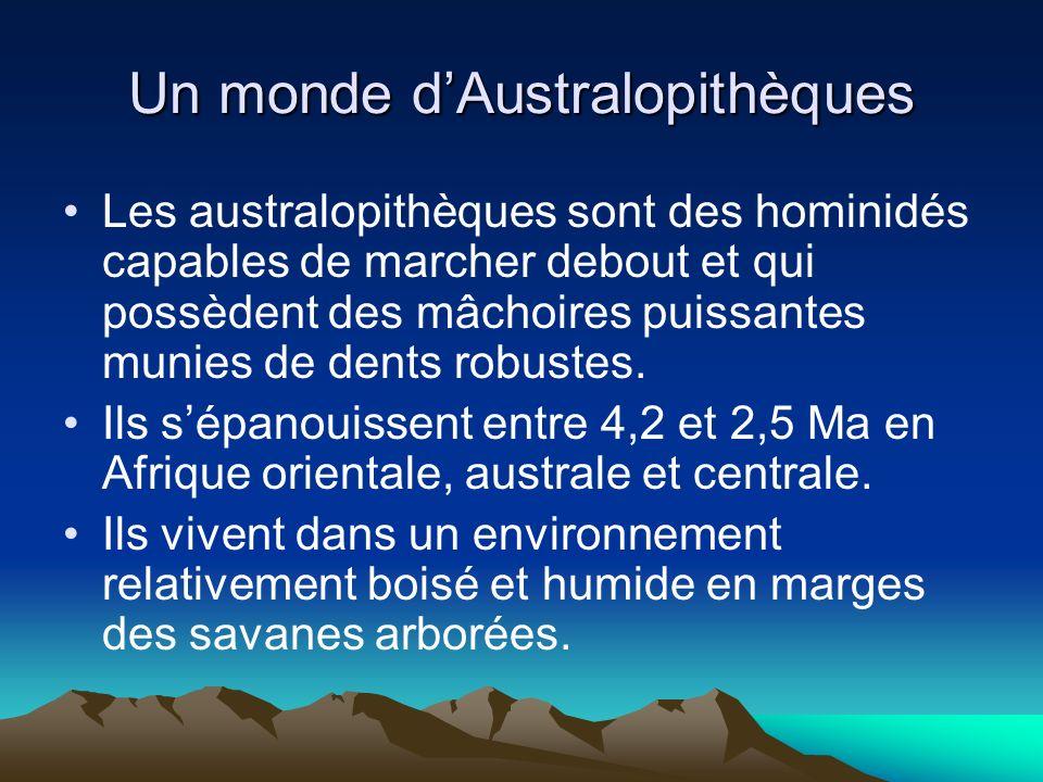 Un monde dAustralopithèques Les australopithèques sont des hominidés capables de marcher debout et qui possèdent des mâchoires puissantes munies de de