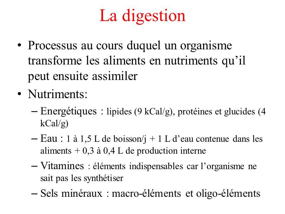 Diététique Répartition idéale de lénergie : – 55 % de glucides (dont 2/3 de glucides complexes) – 30 % de lipides (dont 1/2 d origine végétale) – 15 % de protides (dont 1/2 d origine végétale)