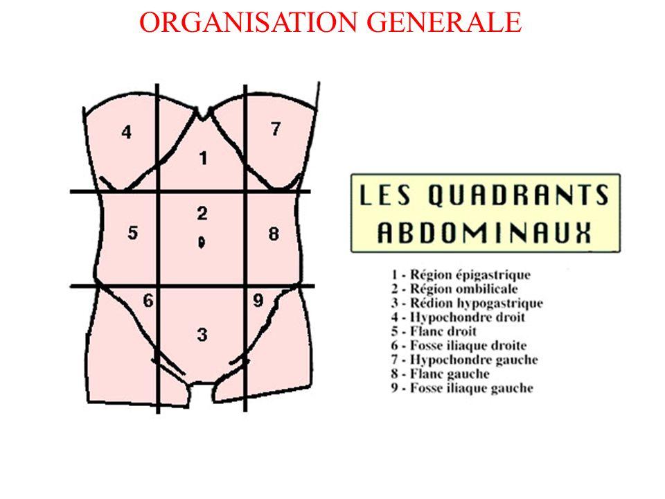 Cavité abdominale : séparée du thorax par le diaphragme