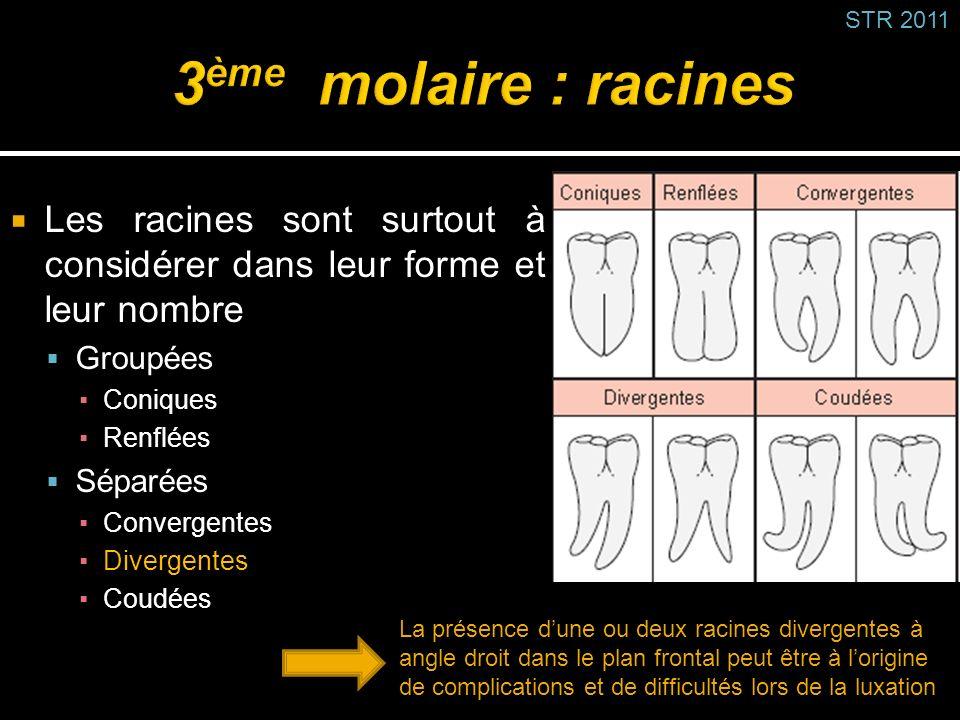 Les racines sont surtout à considérer dans leur forme et leur nombre Groupées Coniques Renflées Séparées Convergentes Divergentes Coudées STR 2011 La