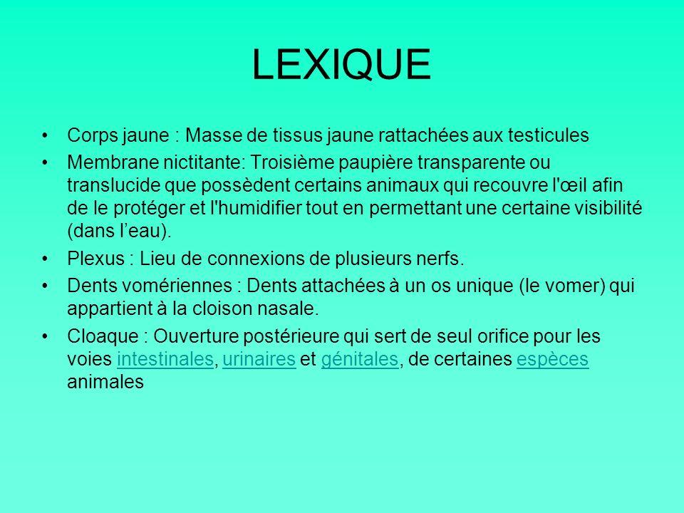LEXIQUE Corps jaune : Masse de tissus jaune rattachées aux testicules Membrane nictitante: Troisième paupière transparente ou translucide que possèden