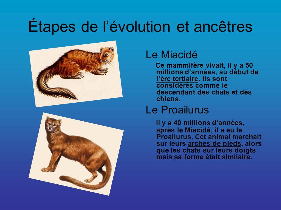 Étapes de lévolution et ancêtres Le Miacidé Ce mammifère vivait, il y a 50 millions dannées, au début de lère tertiaire. Ils sont considérés comme le
