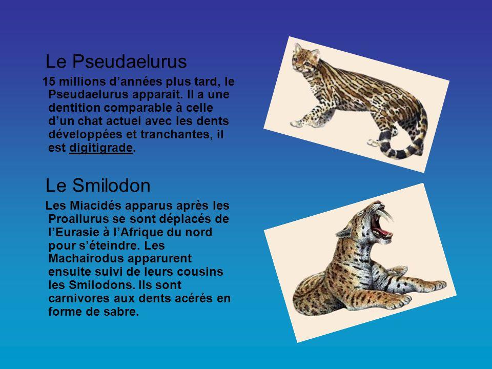 Le Pseudaelurus 15 millions dannées plus tard, le Pseudaelurus apparait. Il a une dentition comparable à celle dun chat actuel avec les dents développ