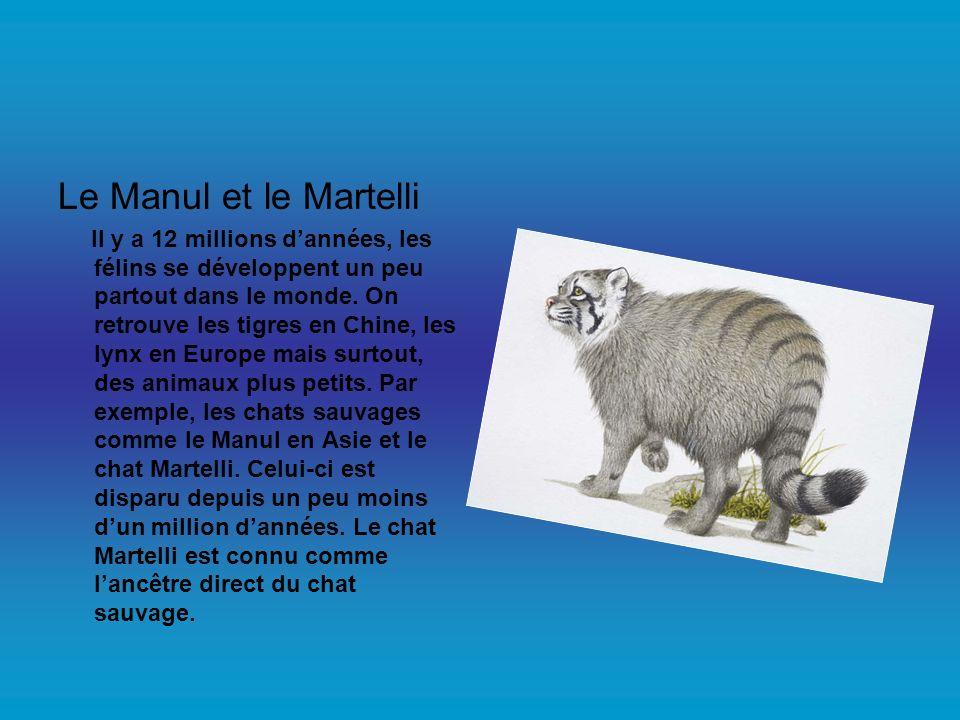 Le Manul et le Martelli Il y a 12 millions dannées, les félins se développent un peu partout dans le monde. On retrouve les tigres en Chine, les lynx