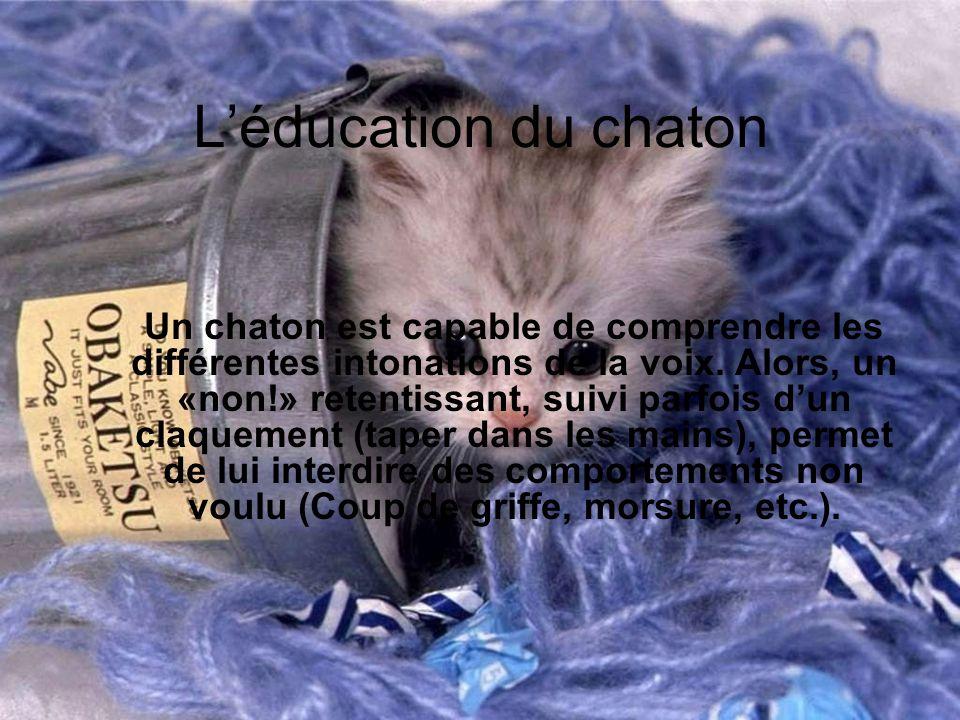 Léducation du chaton Un chaton est capable de comprendre les différentes intonations de la voix. Alors, un «non!» retentissant, suivi parfois dun claq