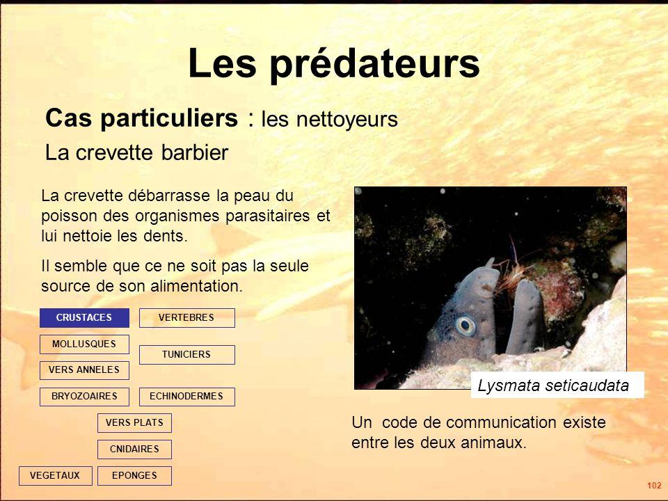 102 Les prédateurs Cas particuliers : les nettoyeurs La crevette barbier EPONGES CNIDAIRES VERS PLATS ECHINODERMES TUNICIERS VERTEBRES VERS ANNELES MOLLUSQUES CRUSTACES BRYOZOAIRES VEGETAUX La crevette débarrasse la peau du poisson des organismes parasitaires et lui nettoie les dents.