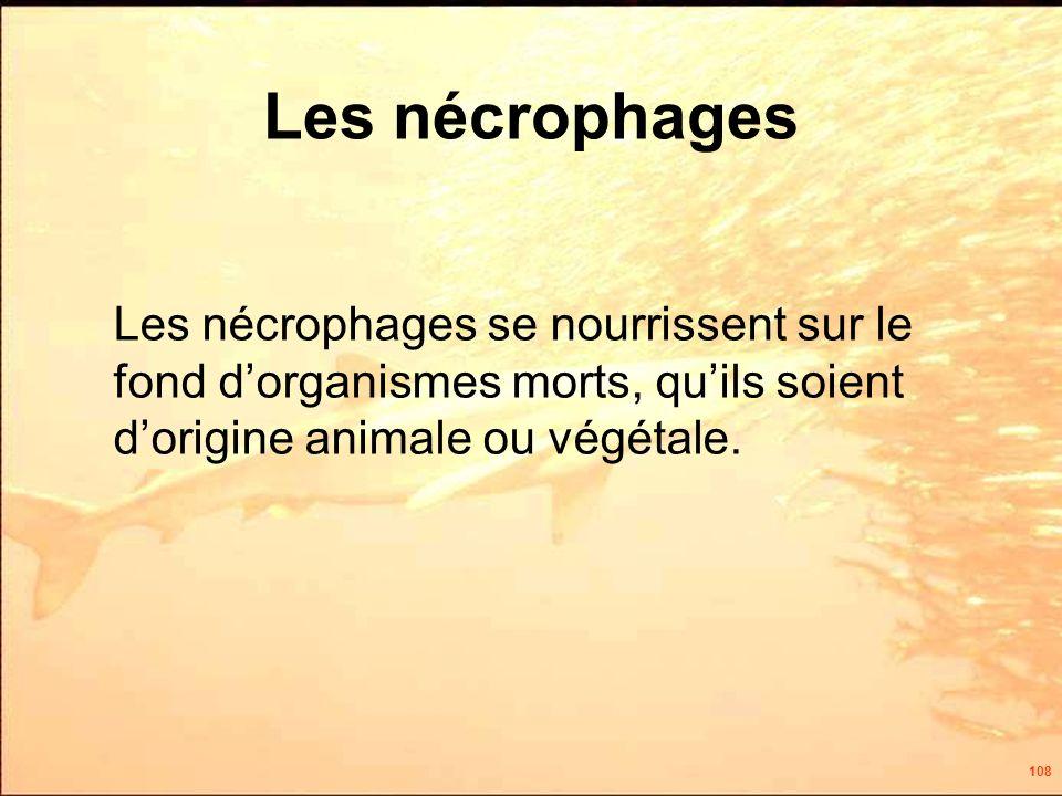 108 Les nécrophages Les nécrophages se nourrissent sur le fond dorganismes morts, quils soient dorigine animale ou végétale.