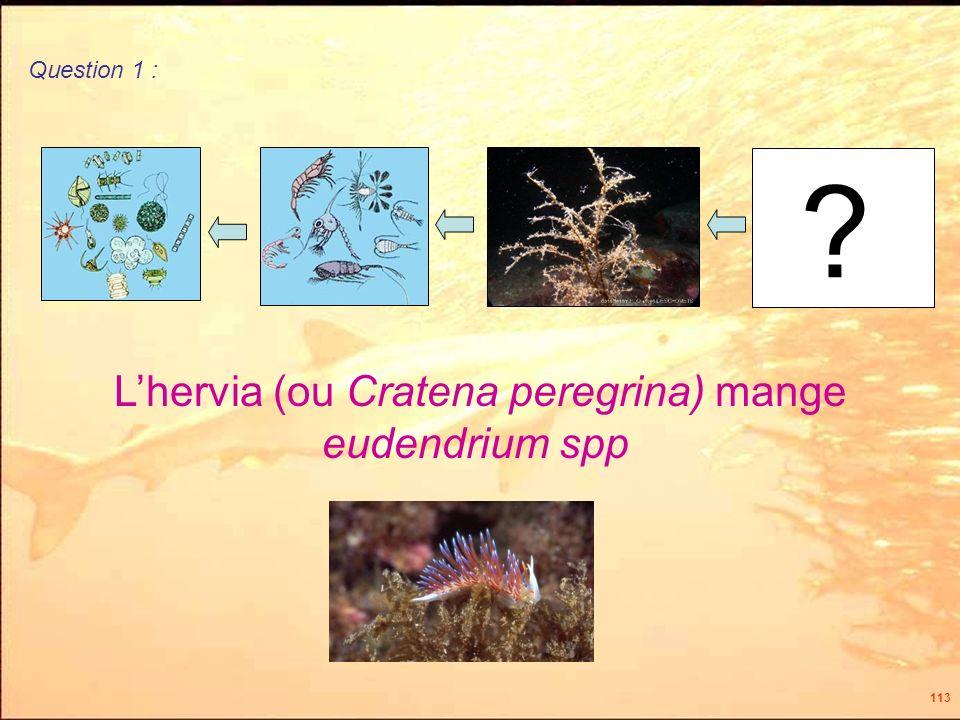 113 ? Lhervia (ou Cratena peregrina) mange eudendrium spp Question 1 :