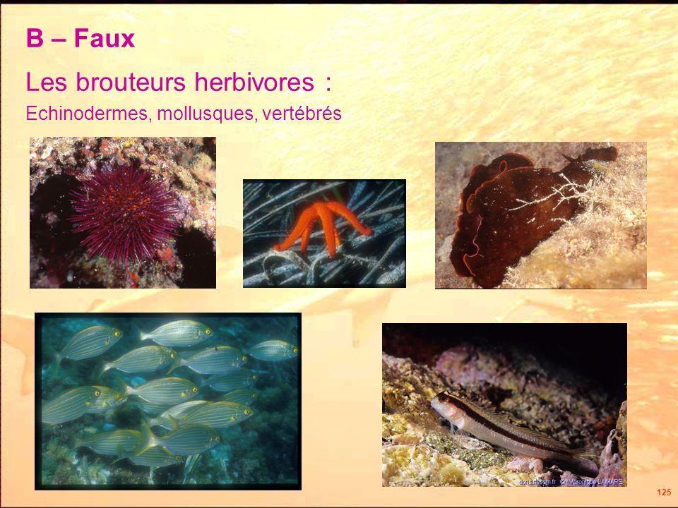 125 Les brouteurs herbivores : Echinodermes, mollusques, vertébrés B – Faux