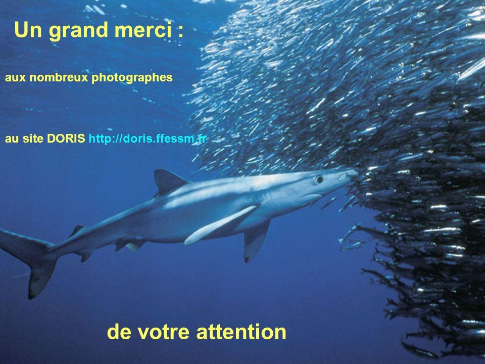 129 Un grand merci : au site DORIS http://doris.ffessm.fr de votre attention aux nombreux photographes