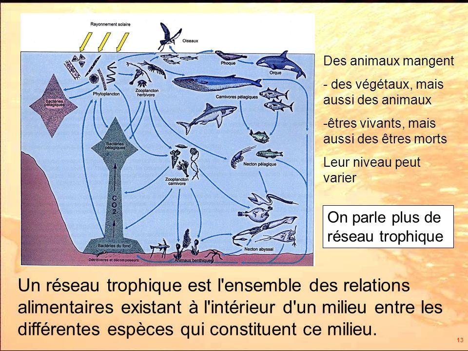 13 On parle plus de réseau trophique Un réseau trophique est l ensemble des relations alimentaires existant à l intérieur d un milieu entre les différentes espèces qui constituent ce milieu.