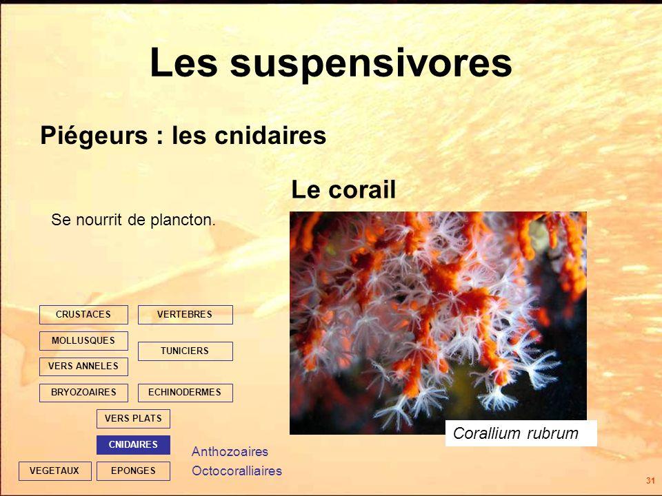 31 EPONGES CNIDAIRES VERS PLATS ECHINODERMES TUNICIERS VERTEBRES VERS ANNELES MOLLUSQUES CRUSTACES BRYOZOAIRES VEGETAUX Les suspensivores Piégeurs : les cnidaires Le corail Se nourrit de plancton.