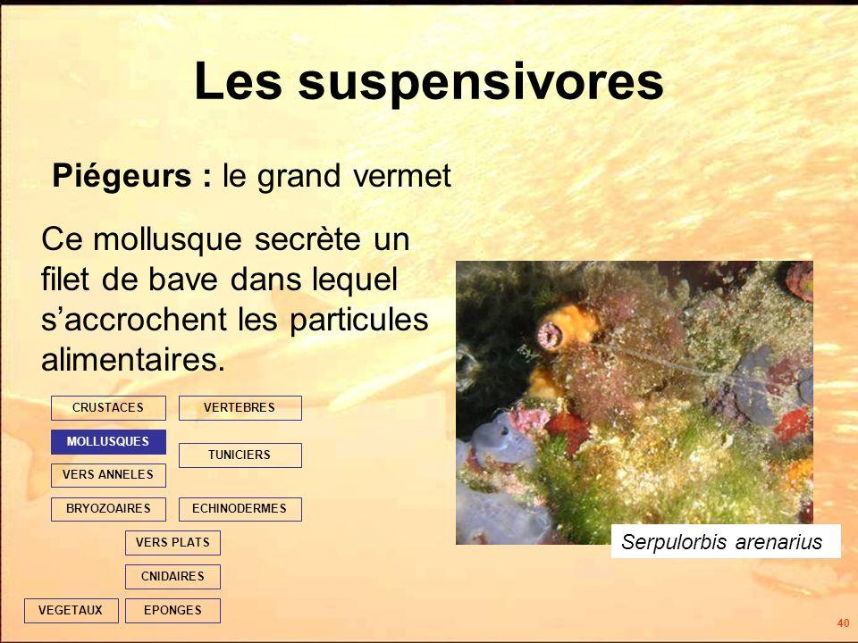 40 Les suspensivores Ce mollusque secrète un filet de bave dans lequel saccrochent les particules alimentaires.