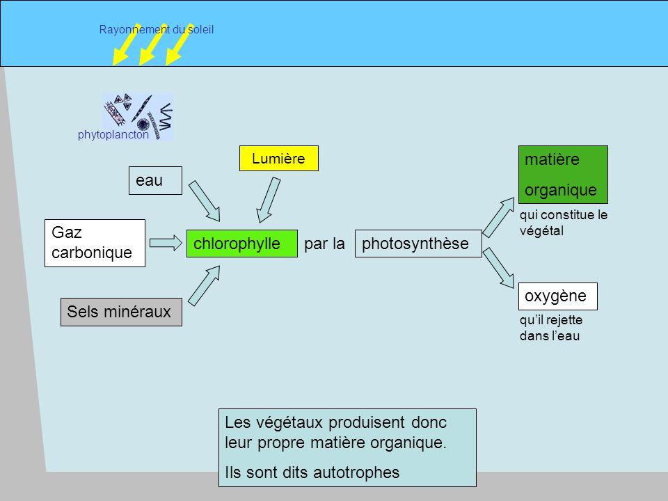5 phytoplancton Rayonnement du soleil chlorophylle Sels minéraux Gaz carbonique eau photosynthèse matière organique par la oxygène qui constitue le végétal quil rejette dans leau Lumière Les végétaux produisent donc leur propre matière organique.