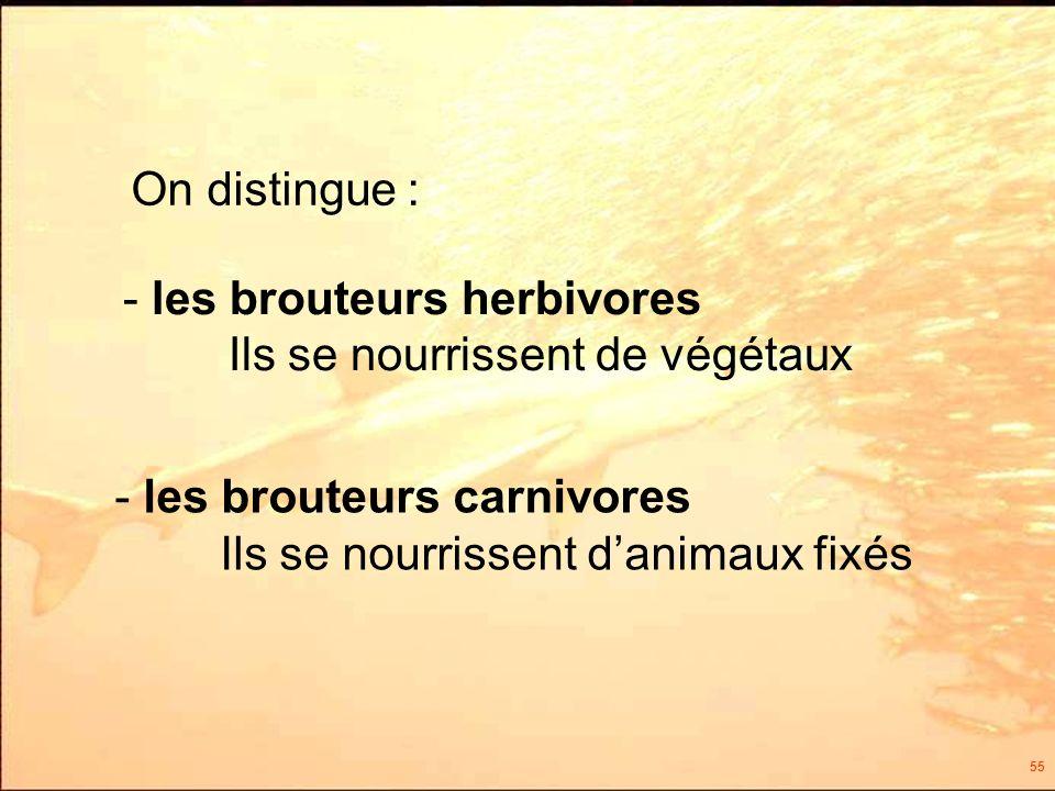 55 On distingue : - les brouteurs herbivores Ils se nourrissent de végétaux - les brouteurs carnivores Ils se nourrissent danimaux fixés