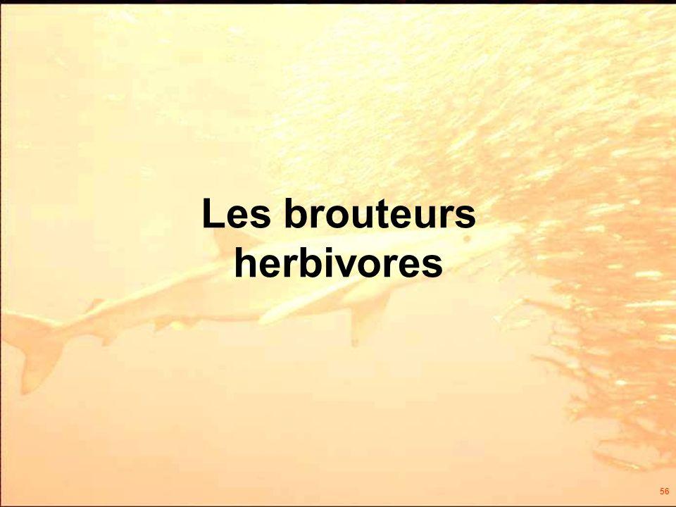 56 Les brouteurs herbivores