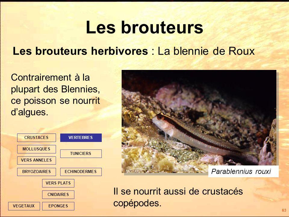 63 Les brouteurs Les brouteurs herbivores : La blennie de Roux EPONGES CNIDAIRES VERS PLATS ECHINODERMES TUNICIERS VERTEBRES VERS ANNELES MOLLUSQUES CRUSTACES BRYOZOAIRES VEGETAUX Contrairement à la plupart des Blennies, ce poisson se nourrit dalgues.