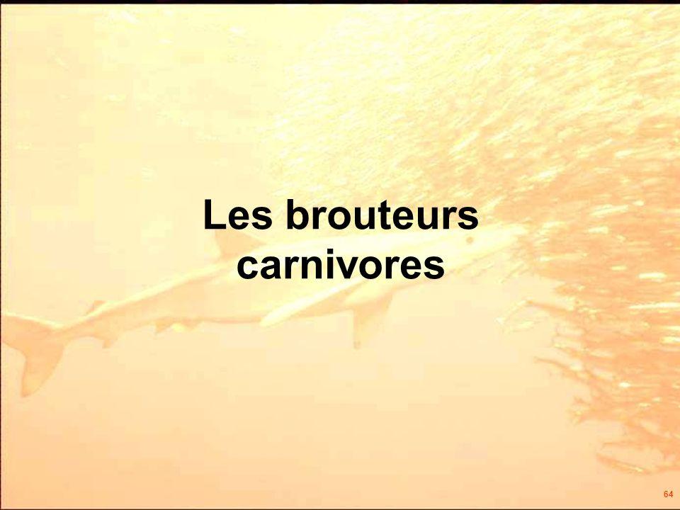 64 Les brouteurs carnivores