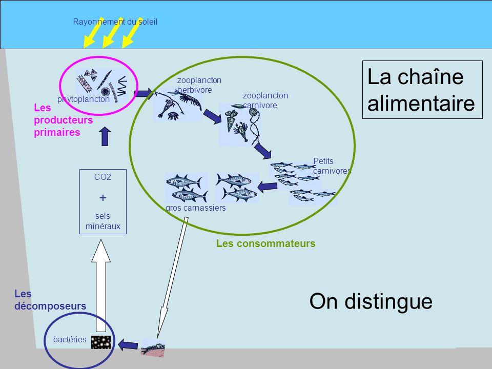 7 phytoplancton Rayonnement du soleil zooplancton herbivore zooplancton carnivore Petits carnivores gros carnassiers CO2 + sels minéraux La chaîne alimentaire bactéries Les producteurs primaires Les consommateurs Les décomposeurs On distingue