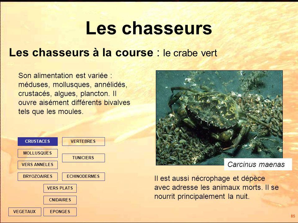 85 Les chasseurs Les chasseurs à la course : le crabe vert EPONGES CNIDAIRES VERS PLATS ECHINODERMES TUNICIERS VERTEBRES VERS ANNELES MOLLUSQUES CRUSTACES BRYOZOAIRES VEGETAUX Il est aussi nécrophage et dépèce avec adresse les animaux morts.