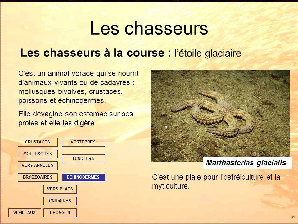 89 Les chasseurs EPONGES CNIDAIRES VERS PLATS ECHINODERMES TUNICIERS VERTEBRES VERS ANNELES MOLLUSQUES CRUSTACES BRYOZOAIRES VEGETAUX Cest un animal vorace qui se nourrit danimaux vivants ou de cadavres : mollusques bivalves, crustacés, poissons et échinodermes.