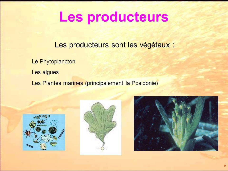 9 Les producteurs Le Phytoplancton Les producteurs sont les végétaux : Les algues Les Plantes marines (principalement la Posidonie)