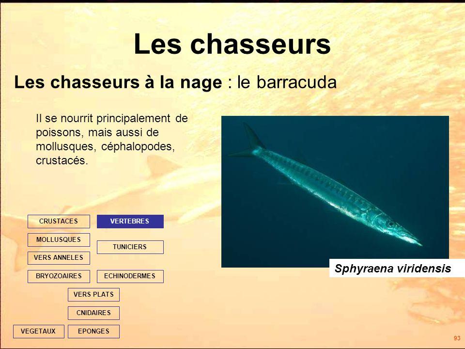 93 Les chasseurs Les chasseurs à la nage : le barracuda EPONGES CNIDAIRES VERS PLATS ECHINODERMES TUNICIERS VERTEBRES VERS ANNELES MOLLUSQUES CRUSTACES BRYOZOAIRES VEGETAUX Il se nourrit principalement de poissons, mais aussi de mollusques, céphalopodes, crustacés.