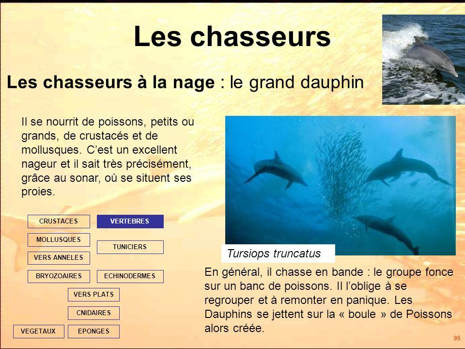 95 Les chasseurs Les chasseurs à la nage : le grand dauphin EPONGES CNIDAIRES VERS PLATS ECHINODERMES TUNICIERS VERTEBRES VERS ANNELES MOLLUSQUES CRUSTACES BRYOZOAIRES VEGETAUX Il se nourrit de poissons, petits ou grands, de crustacés et de mollusques.