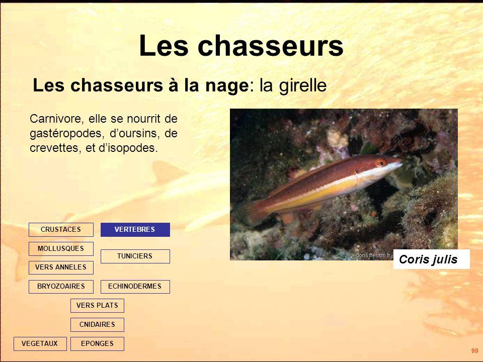 99 Les chasseurs Les chasseurs à la nage: la girelle EPONGES CNIDAIRES VERS PLATS ECHINODERMES TUNICIERS VERTEBRES VERS ANNELES MOLLUSQUES CRUSTACES BRYOZOAIRES VEGETAUX Carnivore, elle se nourrit de gastéropodes, doursins, de crevettes, et disopodes.