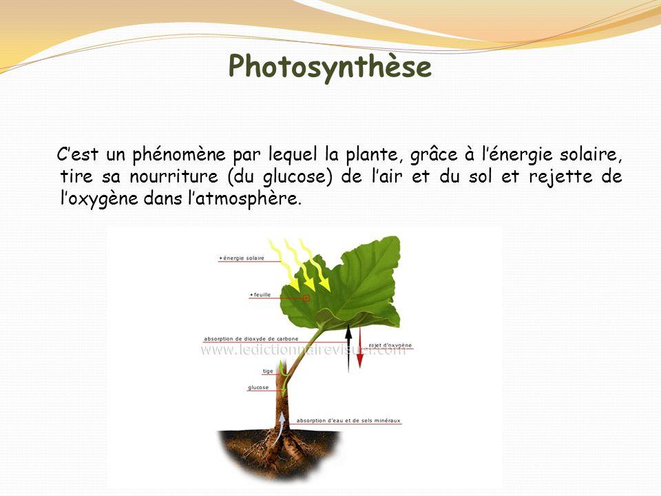 Photosynthèse Cest un phénomène par lequel la plante, grâce à lénergie solaire, tire sa nourriture (du glucose) de lair et du sol et rejette de loxygè